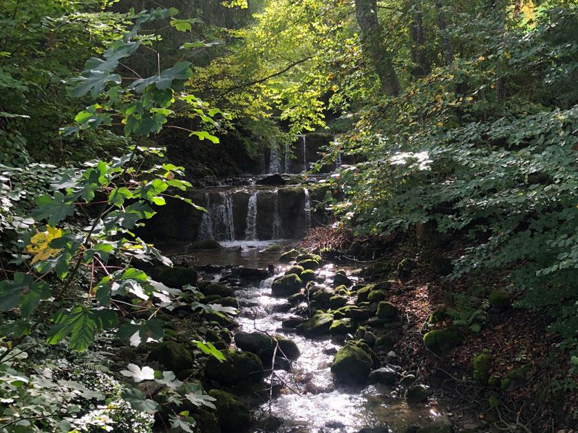 Nimm die die Natur mit all deinen Sinnen wahr bei deinem Herbstspaziergang.