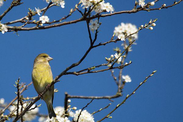 Beobachte die Vögel bei deinem Achtsamkeitsspaziergang im Frühling