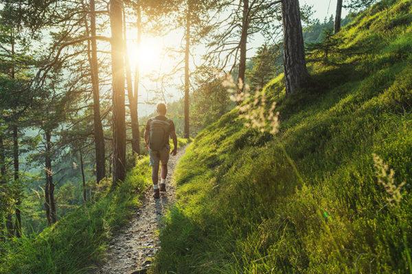 Waldbaden als digital Detox