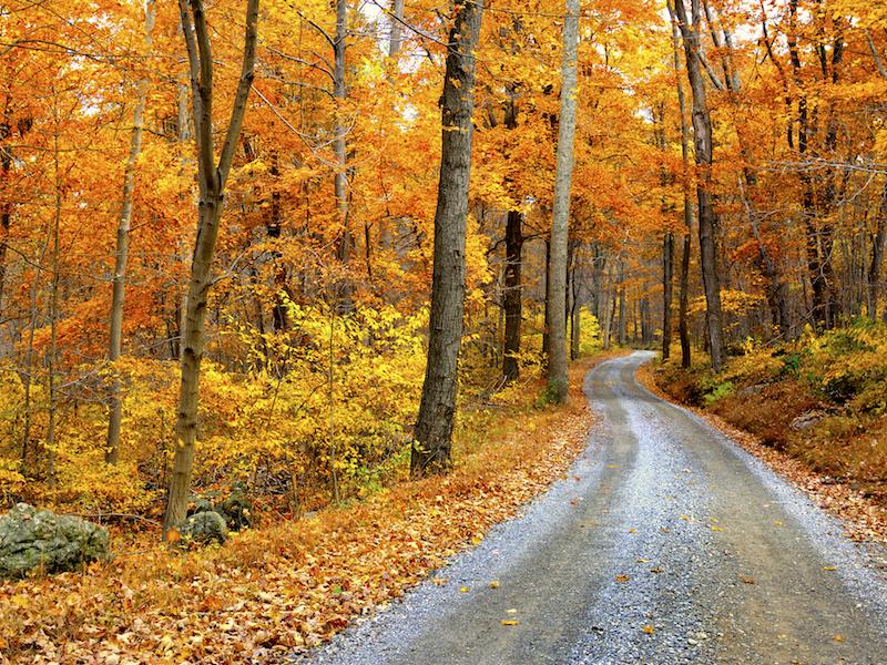 Dein achtsamer Herbstspaziergang mit go4health