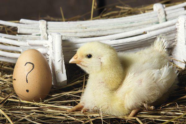 Osterzeit ist Eierzeit! Eier enthalten viele Vitamine und Spurenelemente